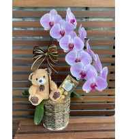 Kit Phalaenopsis com Urso e Chocolate