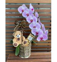 Kit Phalaenopsis com Urso e Chocolate